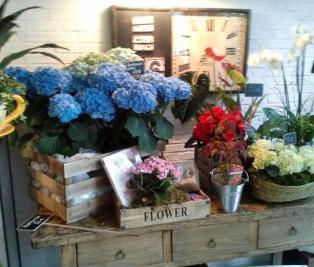 Salon del Fleures. Tienda de flores y meriendas Te Veo en Madrid