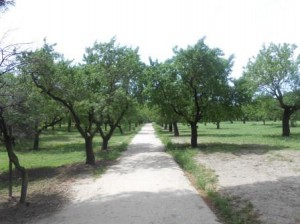 Parque Quinta de los Molino 017