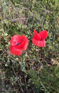 la-casa-de-campo-paseo-con-lucia-valcarcel-flores-te-veo-en-madrid.jpg