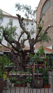 floristeria-el-angel-del-jardin-te-veo-en-madrid