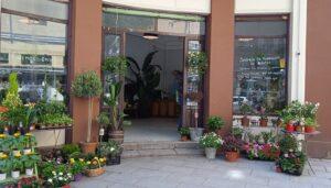 Las-mejores-floristerias-plantas-luego-existes-te-veo-en-madrid-2.jpg