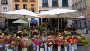 floristerias-mar-por-senas-derecha-e-izquierda-huerta-juan-fernandez-te-veo-en-madrid-2.jpg